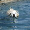 Swimmer38