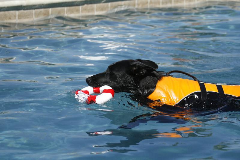 Swimmer29