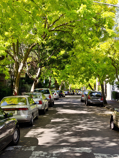 Womerah Avenue, Darlinghurst<br /> Only Sydney City Council could be stupid enough to use these pseudo acacias  as street plantings: despite their beauty they are  shallow rooted so they stress in the dry, are unstable when wet and spend the whole of summer dropping leaves. Any how> why bother having an introduced deciduous species as a public planting when we have so many beautiful natives????