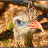 Red-Legged Seriema - One of few birds with eyelashes