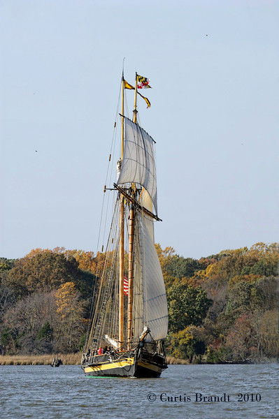 Pride of Baltimore II    October 30th, 2010  Sultana Downrigging  Chestertown MD