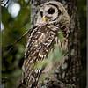 Bill's Owl edited