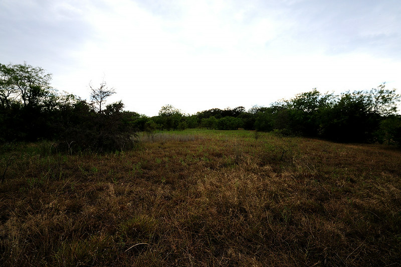 VIEW OF THE BACK PASTURE <br /> FROM FRONT TO BACK