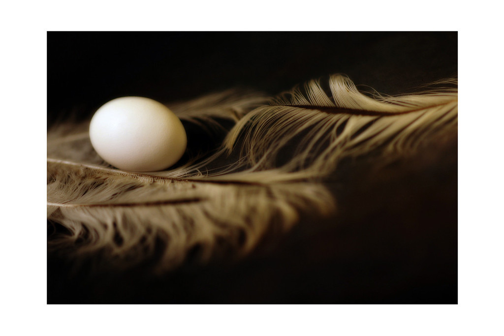 The Egg and the Feathers