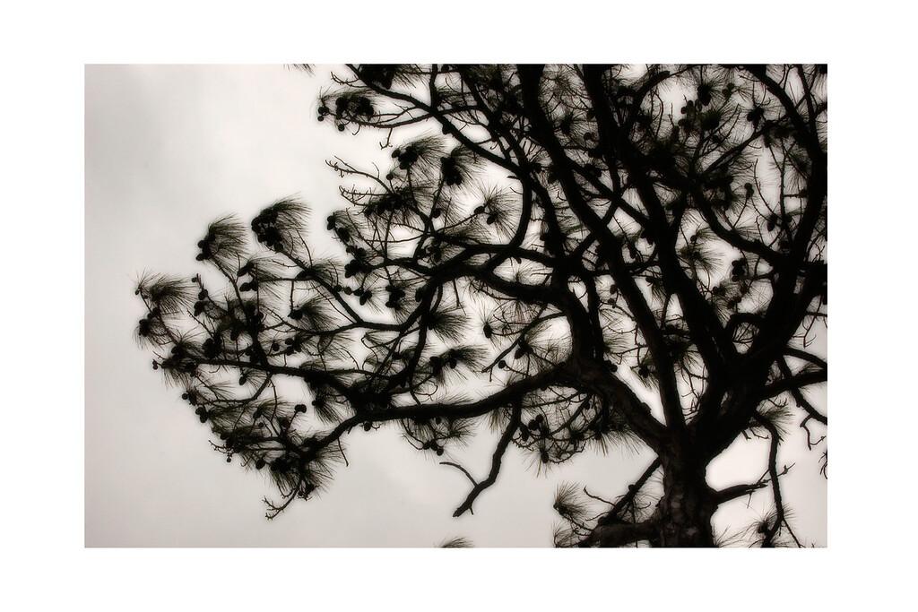 Tree Shades