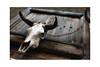 Santa Fe Skull