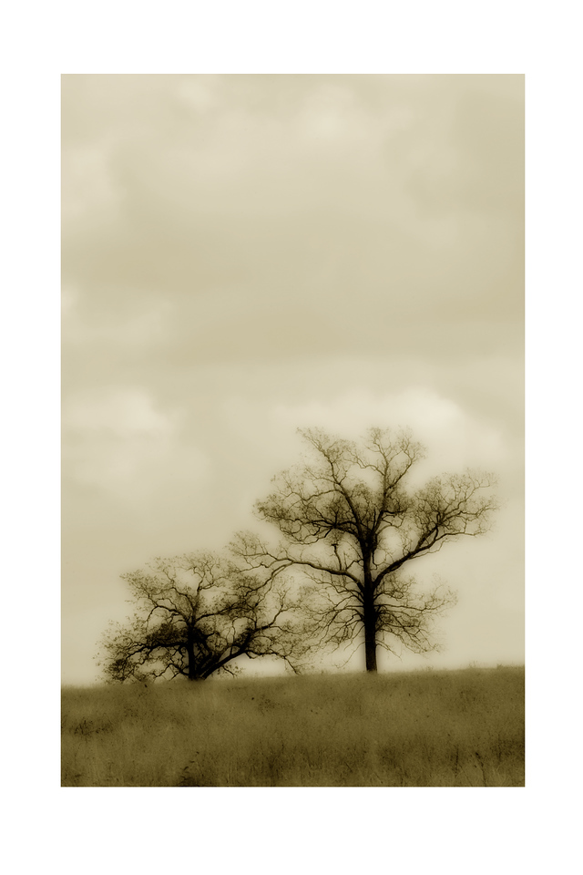 The Sepia Trees