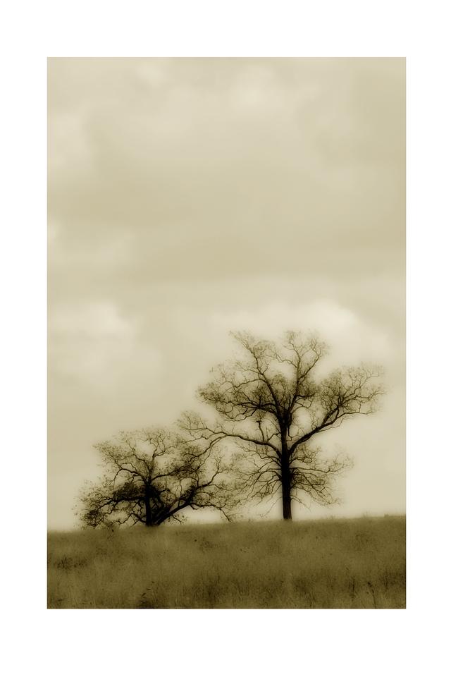 The Sepia Trees