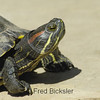 TURTLES and TORTISES 06