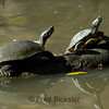 TURTLES and TORTISES 11