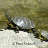 TURTLES and TORTISES 07