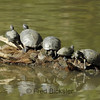 TURTLES and TORTISES 15