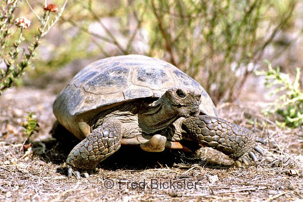 TURTLES and TORTISES 01