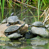 TURTLES and TORTISES 10