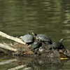 TURTLES and TORTISES 04