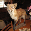 For some reason, all the taxidermied critters wore spectacles.