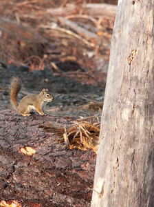 Squirrel at LAW 005