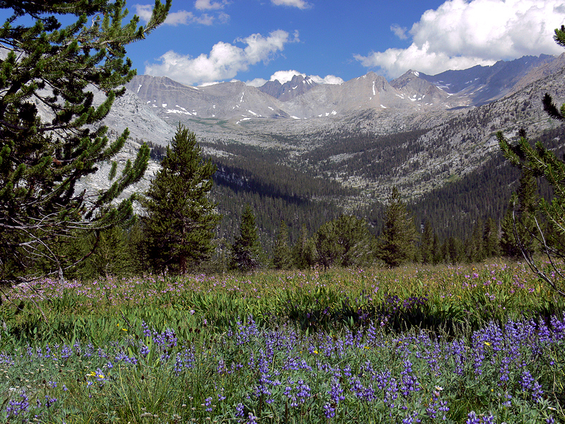 Lupine carpets the scene stretching to the Palisade group of peaks in the cloud-studded distance.