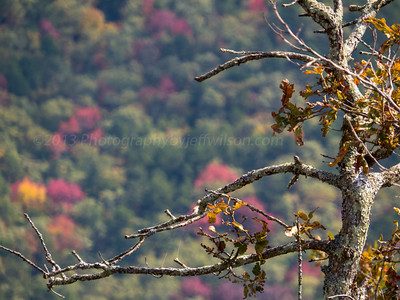 Talimina Scenic Drive.  Long telephoto compressed view of old tree with colorful bokeh in the background.