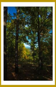 Talimina Scenic Drive, Horsethief Springs.