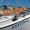 Anastasi Finger Sponges