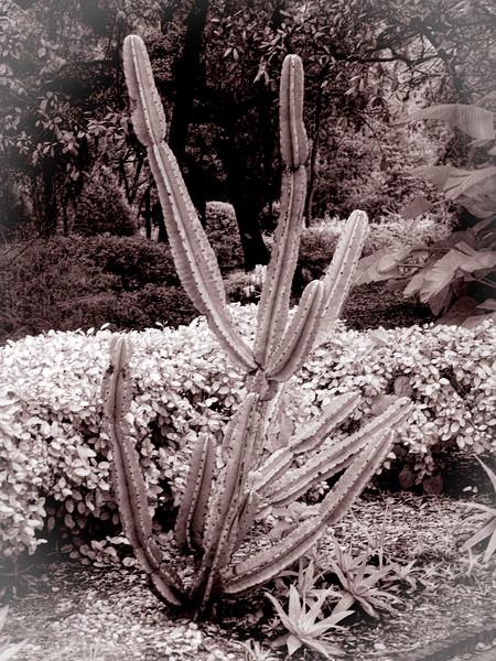Cactus at Spring Hill Garden Club