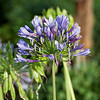 Bushnell Florida Flowers
