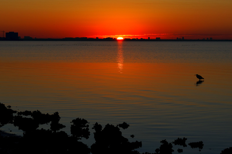 Sunrise on Tampa Bay