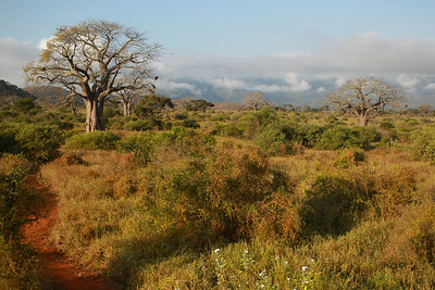 Mkomazi NP Tanzania 2014 07 01.JPG