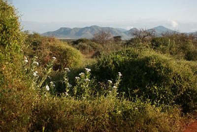 Mkomazi NP Tanzania 2014 06 30-2.JPG