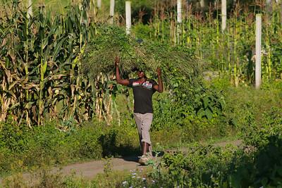 Worker  Arusha Tanzania 2014 06 29.JPG