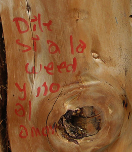 """Written on a tree: """"Say yes to the weed, and no to love."""""""