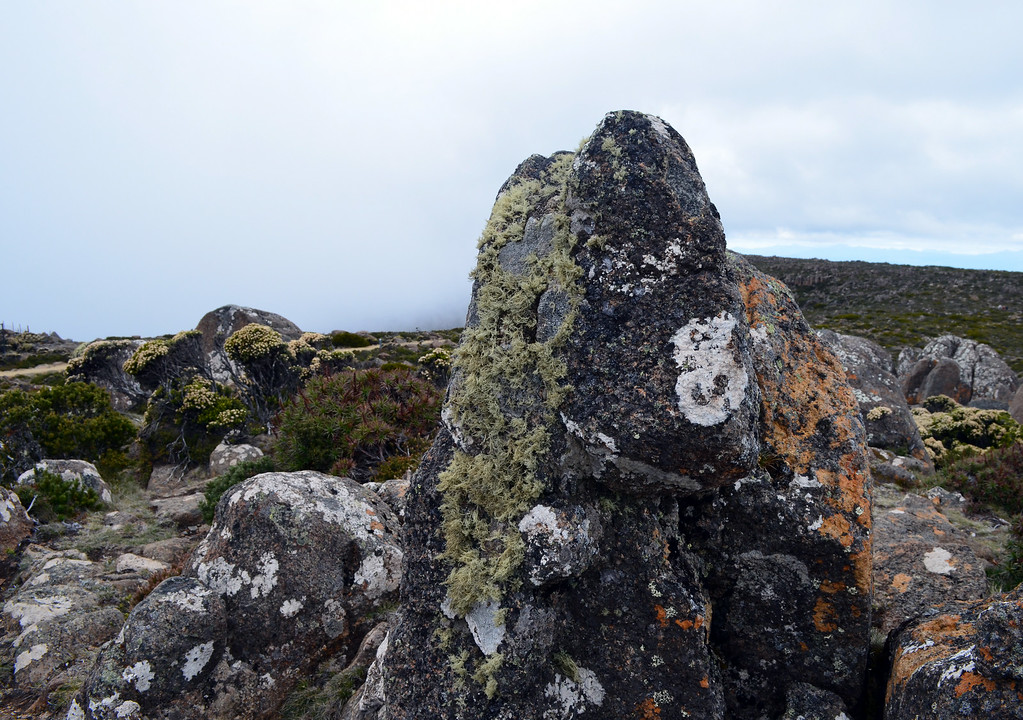Mount Wellington Lichen