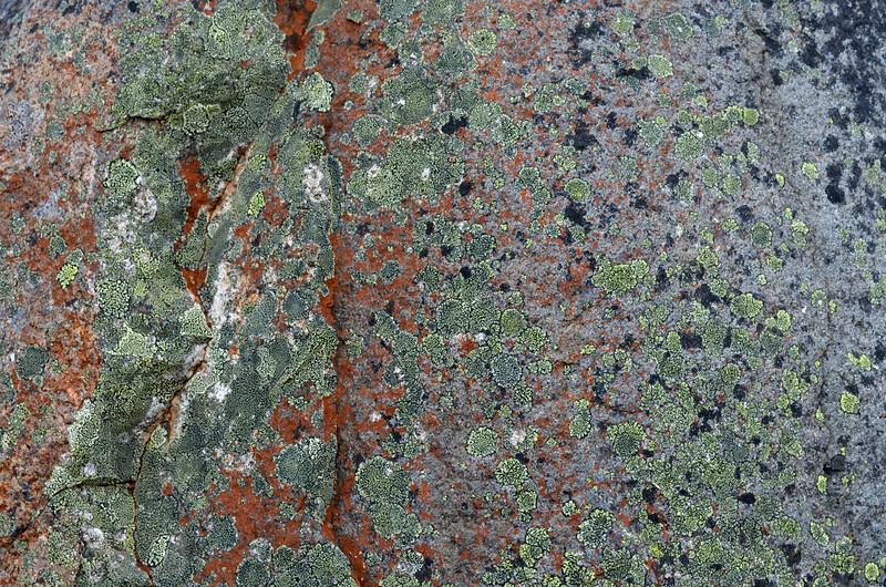 Lichen on Mount Wellington