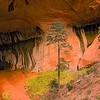 Taylor Creek - Zion National Park - USA