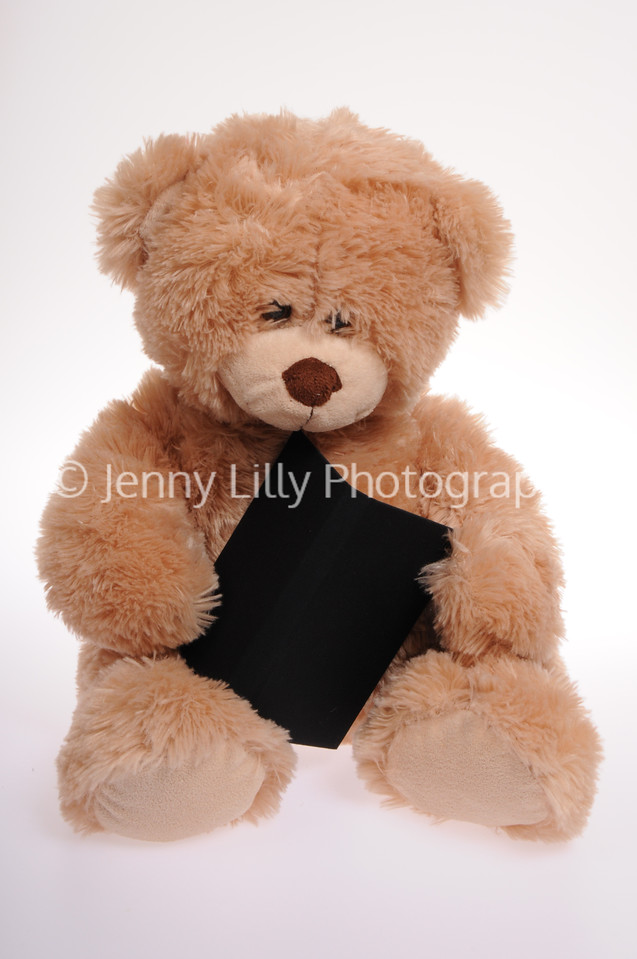 teddy bear holding a book isolated on white background