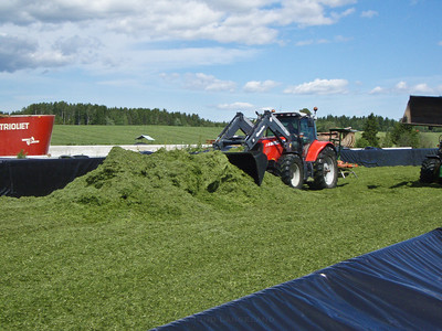 Grashøsting-10
