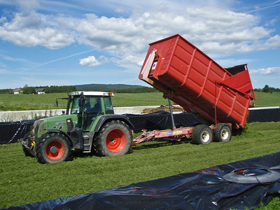 Grashøsting-5
