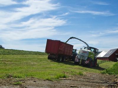 Grashøsting-3