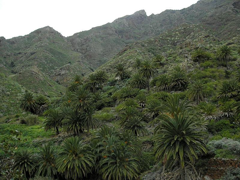 natuerlicher palmenhain, christianes geheimtip