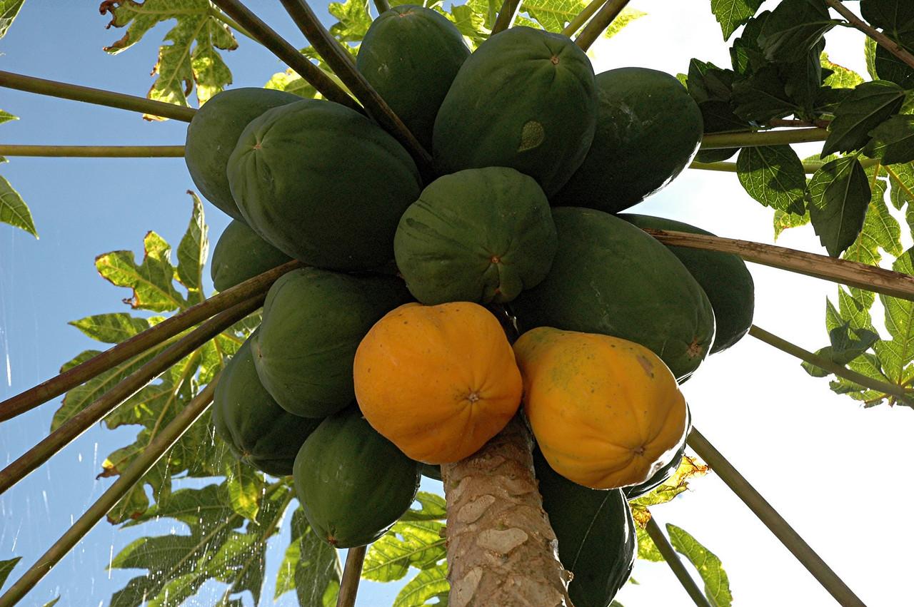 ... herrlich gedeckter tisch mit eigenen papayas