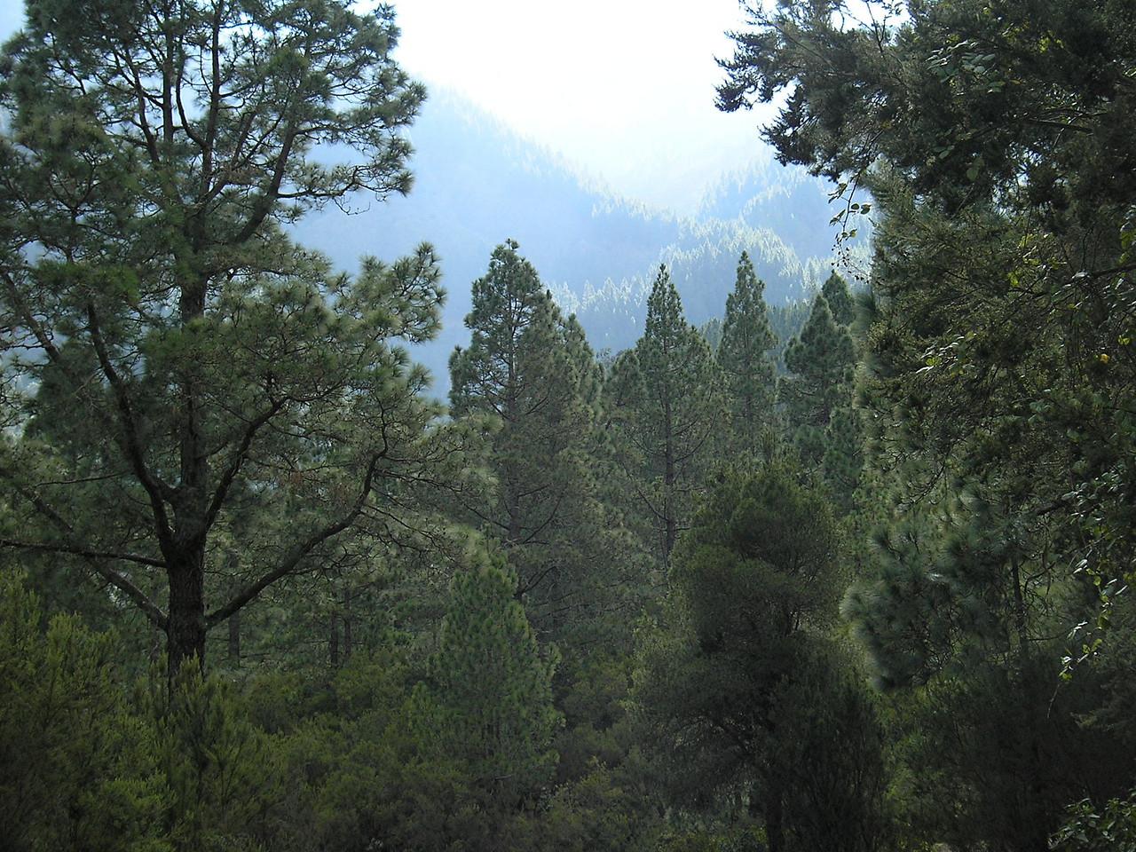 wanderung durch den nebelwald