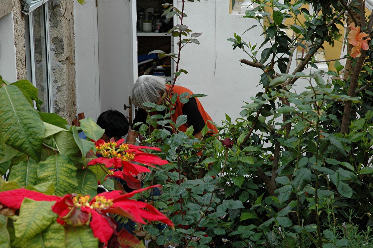 """andy und hilda bei """"arbeitsgespraechen"""" hinter weihnachtssternen im patio"""