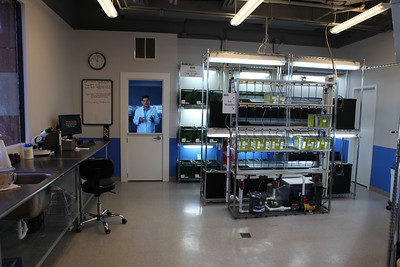 One of the labs in the aquarium.