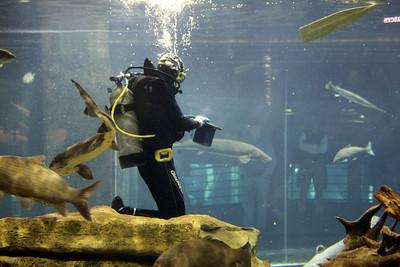 Diver feeding the fish.