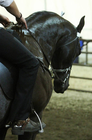 Tennessee Walking Horse Show 2011