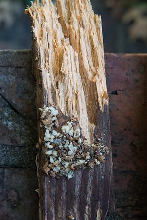 Termites?