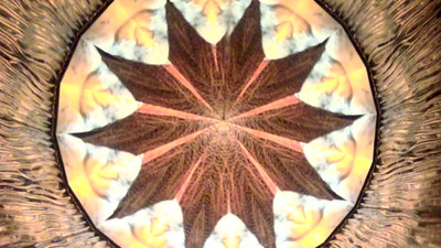 Kaleidoscope Crop