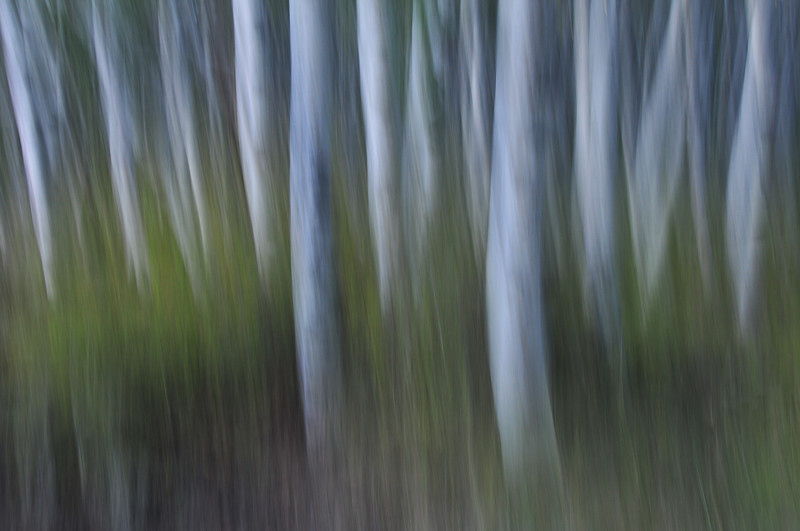 abstract, trees, forest