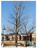 127 Sigma Test 122511. Harriet Island. Monopod. Yellow arrow at center indicates exotic wildlife. (Grey squirrel. It's Minnesota in December. You were expecting parrots?)